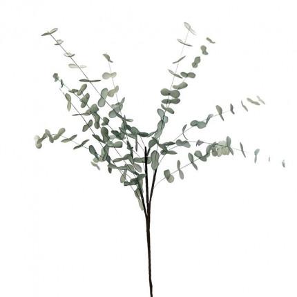 Φυτό/Κλαδί