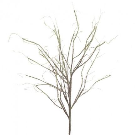 Κλαδί/Φυτό