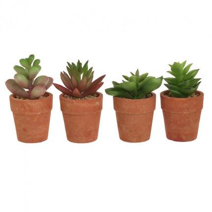 Φυτό Σε Γλάστρα 6 Σχέδια