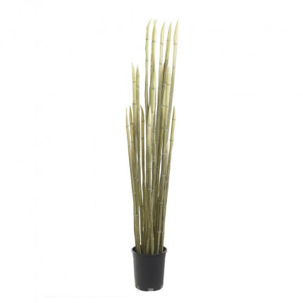 Φυτό Σε Γλάστρα